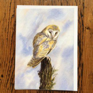 Barn Owl (I)