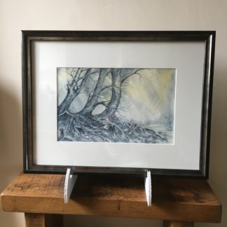 Beech trees & roots framed