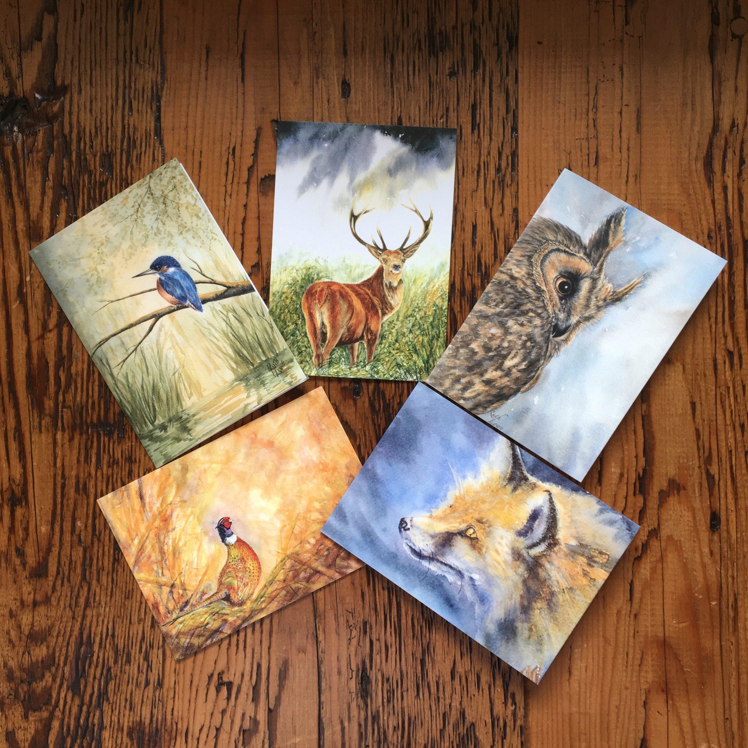 Exmoor Wildlife Pack
