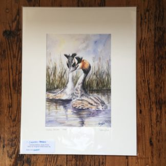 Crested Grebes Limited Edition Print - Mounted