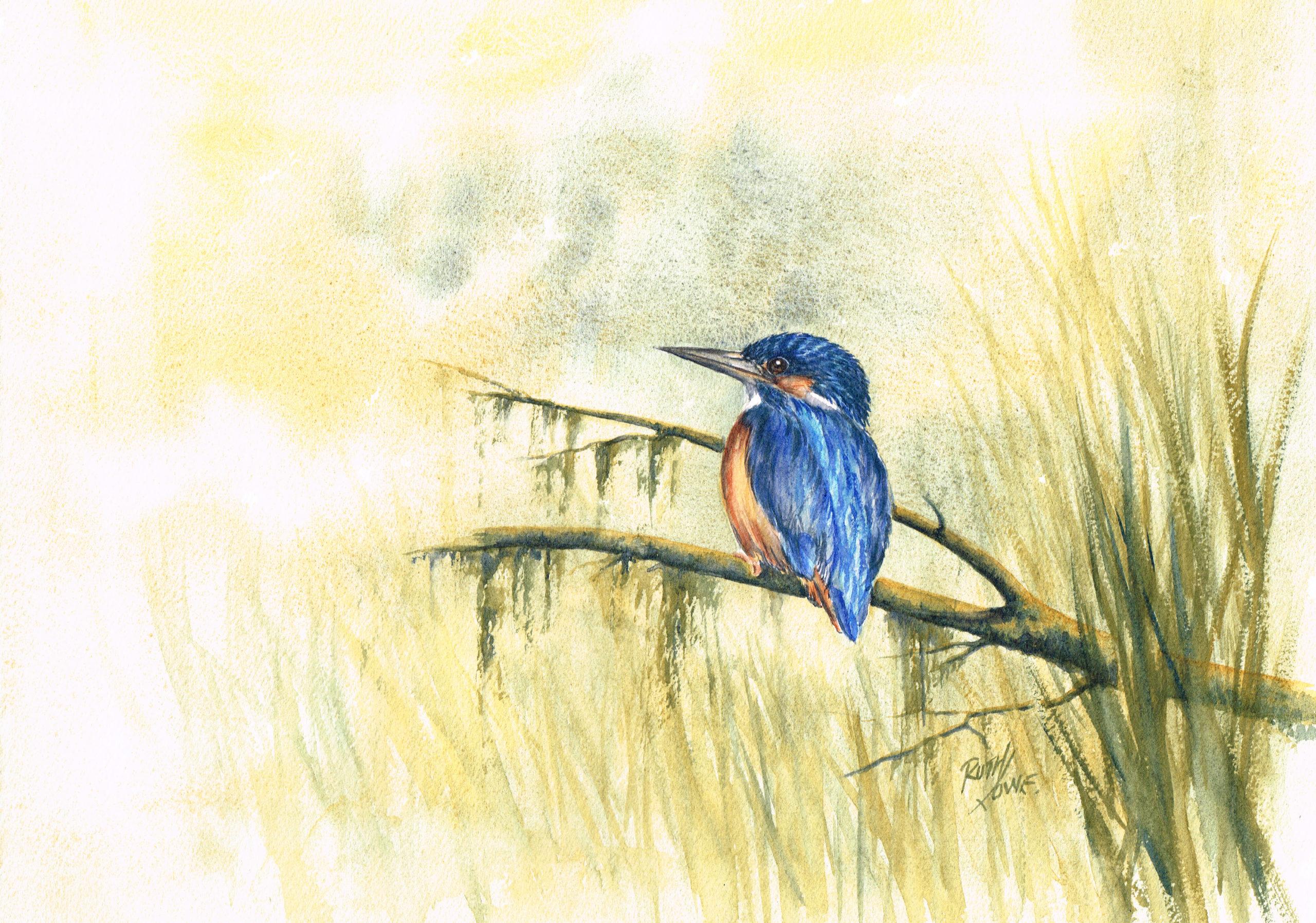 Sentinel Kingfisher