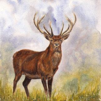 Exmoor Hart - Print